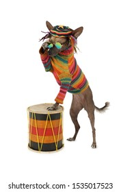 Xoloitzcuintle dog in clothes and glasses plays the drum, isolated on white background
