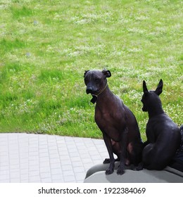 Xoloitzcuintli two sit on the lap of the hostess. A Mexican Naked Dog. A couple of pets on a walk in the park with the owner. Bald dogs are resting.