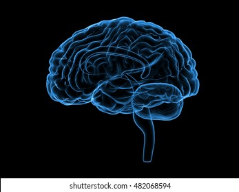 X-ray human brain, 3d illustration