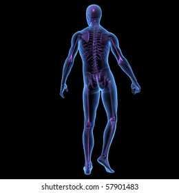 X-ray illustration of male human body and skeleton standing. 3D render, back view.