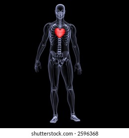 X-Ray of a male skeleton displaying a valentine heart. Isolated on a black background