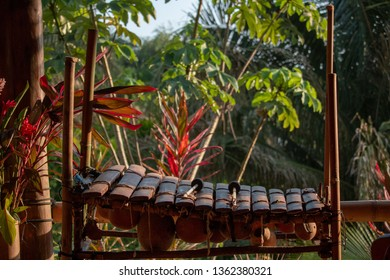 Xylophone in the Tropics