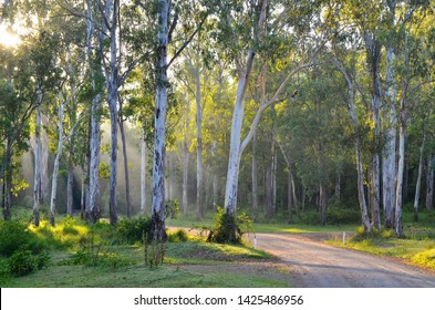 YABBA CREEK, QUEENSLAND, AUSTRALIA: Bluegum flat, an endangered ecosystem in south-east Queensland, with Forest Red Gum or Queensland Blue Gum growing on a fertile creek flat, sites largely cleared.