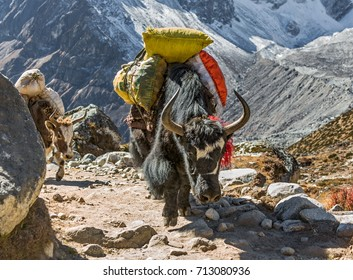 Yak caravan on the way to Everest Base Camp near Dukla (Tukla) village - Everest region, Nepal, Himalayas
