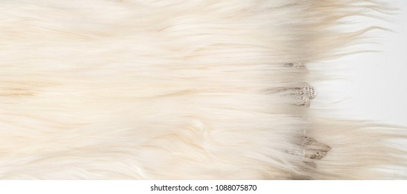 Yak Fur. The yak (Bos grunniens and Bos mutus) is a long-haired bovid found throughout the Himalaya region of south Central Asia