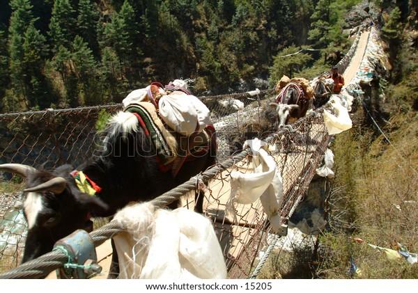 Yaks transporting loads over bridge - Nepal