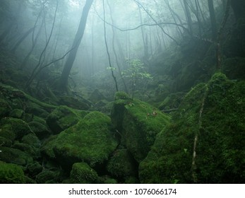 yakushima forest after rain, kagoshima, Japan