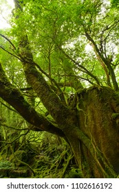 Yakushima world heritage in Japan