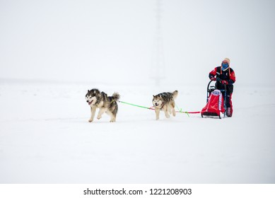 Yakutsk, Republic of Sakha (Yakutia)/Russia-March 04 2017: Dog Sledding on the Lena River