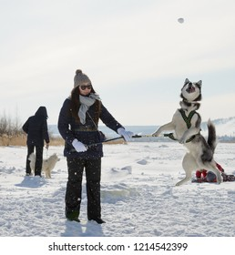 Yakutsk, Republic of Sakha (Yakutia)/Russia-March 20 2016: young Yakut woman playing with her siberian husky, tossing snowball