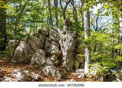 Yalta mountain forest natural reserve. Forest on Mount Ai-Petri. the south coast of Crimea
