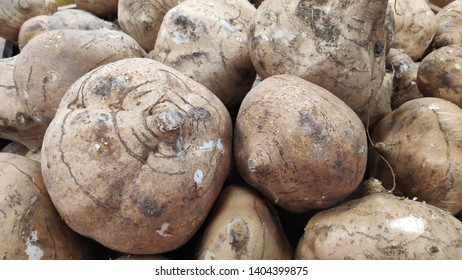 Yam Bean or Jicama unpeeled in the market for sell