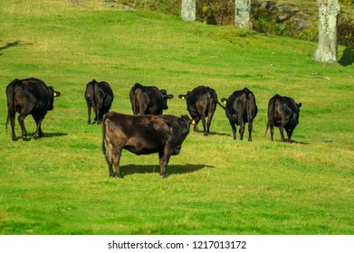 """""""Yamada Ranch"""" In the meadow spread over the southern foot of Kasadake, you can see the North Alps."""