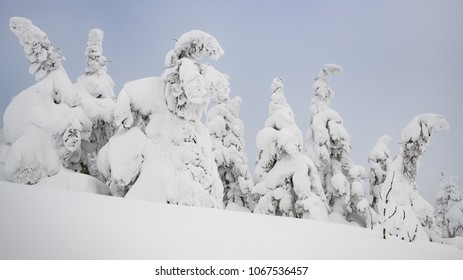 Yamagata frozen forest with snow monsters (frozen trees called juhyo) during tempest