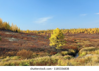 Yamal forest tundra on a Sunny autumn day in Siberia
