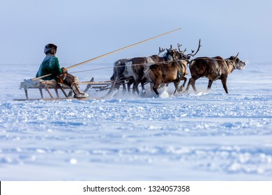 Yamal, open area, tundra,The extreme north,  Races on reindeer sled in the Reindeer Herder's Day on Yamal,