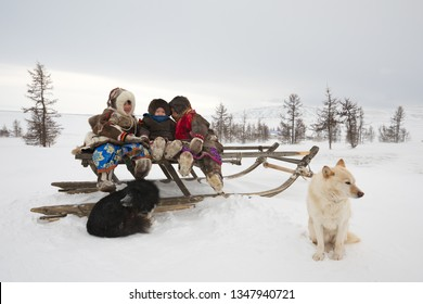 Yamal, Russia - March 05, 2019: Children of Nenets nationality play on a sleigh with llcal laika dogs.Nomad Nenets people live in yurts, migrate with reindeer in the polar tundra around Arctic circle.