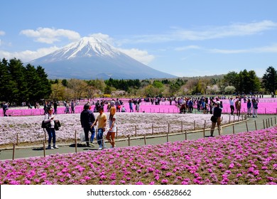 Yamanashi -MAY 5: Visitors enjoy flower garden in Fuji Shibazakura Festival, Yamanashi, Japan on May 5, 2017. This is the flower festival which gives color to Mt. Fuji with their gorgeous color.