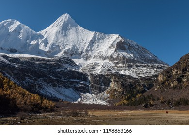 Yangmaiyong mountain and snow peak surrounded by pine forest with pair of tibet monk in yellow grass field in clear blue sky day in autumn season at Yading National Park,  Daocheng, Sichuan, China