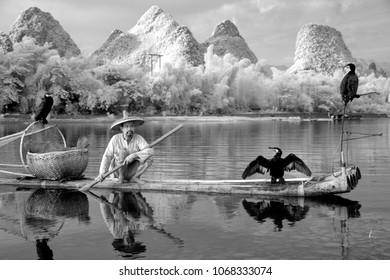 YANGSHUO - JUNE 18: Chinese man fishing with cormorants birds in Yangshuo, Guangxi region, traditional fishing use trained cormorants to fish, June 18, 2012 Yangshuo in Guangxi, China