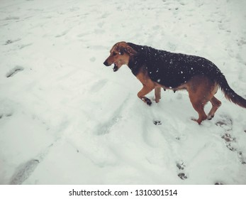 Yard dog running outside in the snow. Snapshot near.