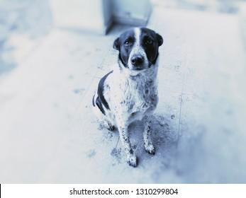 Yard dog, sitting on the street. Snow on the street. Snapshot near.