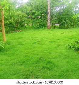 The yard of the house is filled with green Pancasila grass to beautify the house