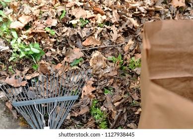 Yard work, bag and rake for collecting leaves.