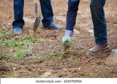Yard work, A Person Weeding in a Garden