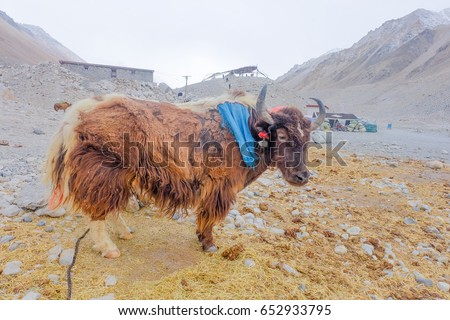 yark everest base camp stock photo edit now 652933795 shutterstock