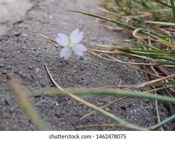 Yaroslavl, Yaroslavskii raion, Russian, 07.08.2018: flower