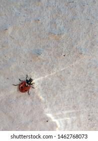 Yaroslavl, Yaroslavskii raion, Russian, 09.07.2019: beetle