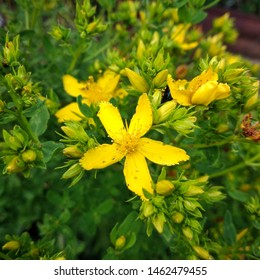 Yaroslavl, Yaroslavskii raion, Russian, 30.06.3019: flower