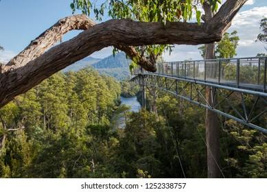 Yarra ranges national park, Australia April 2018.