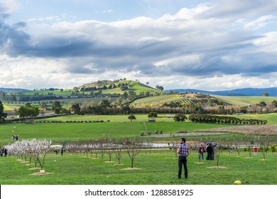 Yarra Valley, Victoria, Australia - Aug 23, 2015: View over the wineries