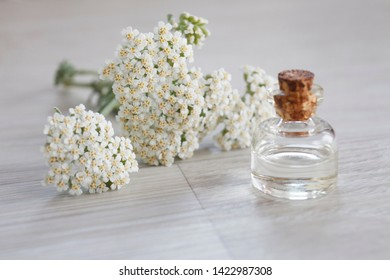 yarrow essential oil bottle with fresh white yarrow flowers on wooden background