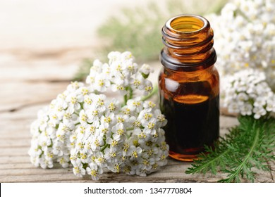 yarrow essential oil in the glass bottle, with fresh yarrow flowers, on the wooden board