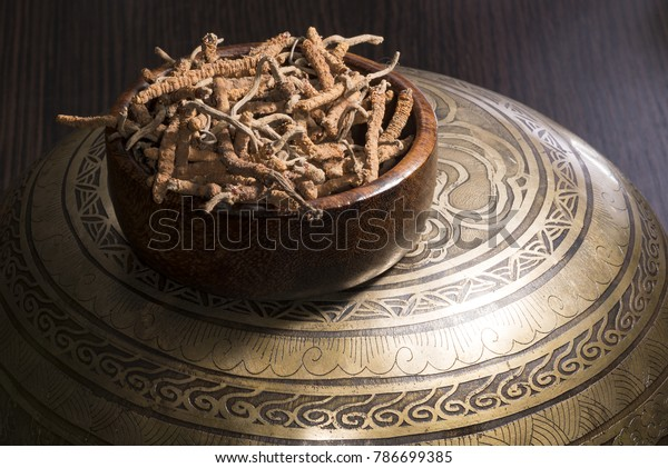 yarsagumba chinese cordyceps, alternative chinese folk medicine, tibet