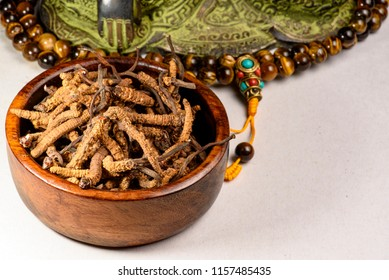 Yarsagumba Chinese mushroom cordyceps, Chinese folk medicine