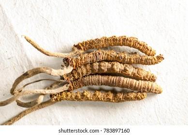 yarsagumba, Cordyceps Chinese, Tibetan folk remedy