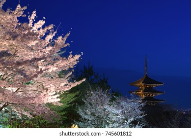 Yasaka Pagoda and cherry blossoms lit up at night, Kyoto, Japan.