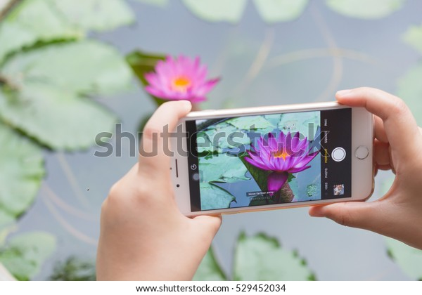 Yasothorn, THAILAND - December 05, 2016: Two Hand holding New Apple iPhone 7 Plus take photo pink lotus with dual camera