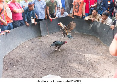 Yasothorn THAILAND JAN-02:man cheer up cockfight,risk to transmission infection with avian (bird) influenza (flu) on January 02,2017 at Yasothorn Thailand