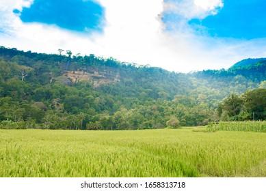 Yatawaththa Village -Mathale Sri Lanka .