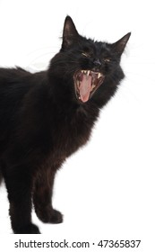 yawning black cat isolated on white