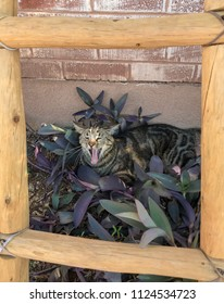 Yawning cat resting in plants