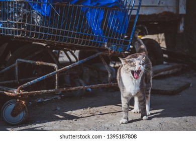 Yawning cat is staying on the street