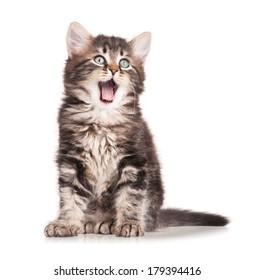 Yawning cute kitten isolated on white background cutout