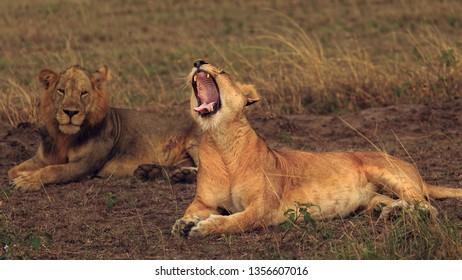 yawning queen in Uganda