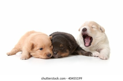 Yawning Sweet and Cuddly Newborn Puppies on White